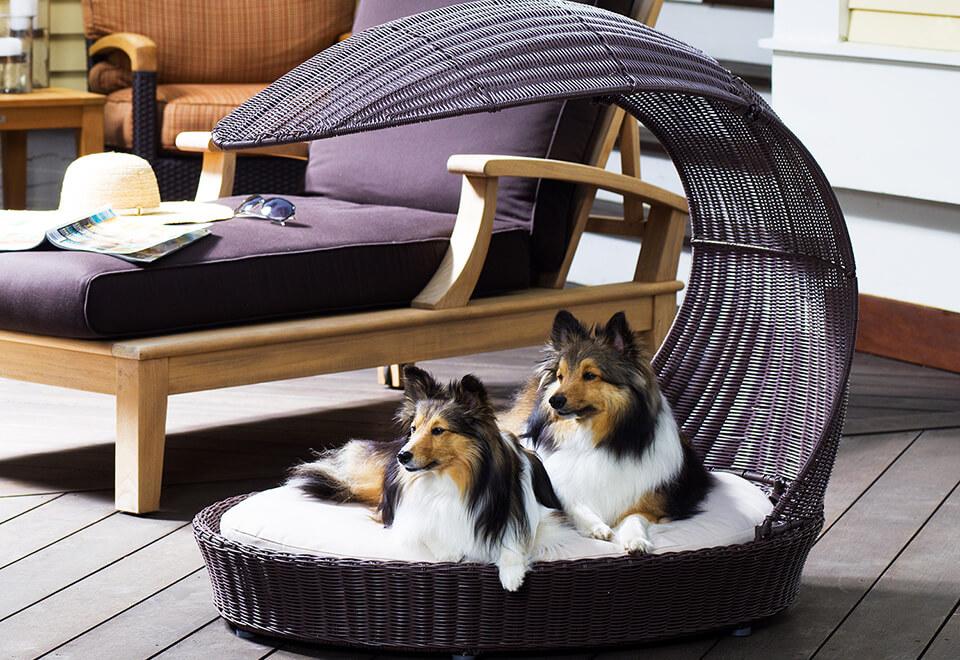 Puppy's Perfect Patio