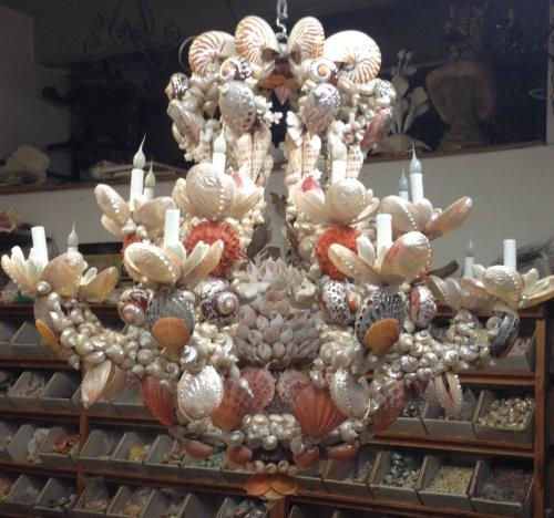 Christa's South Seashells